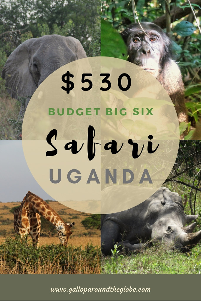 My $530 Budget Big Six Safari with Red Chilli in Uganda | Gallop Around The Globe