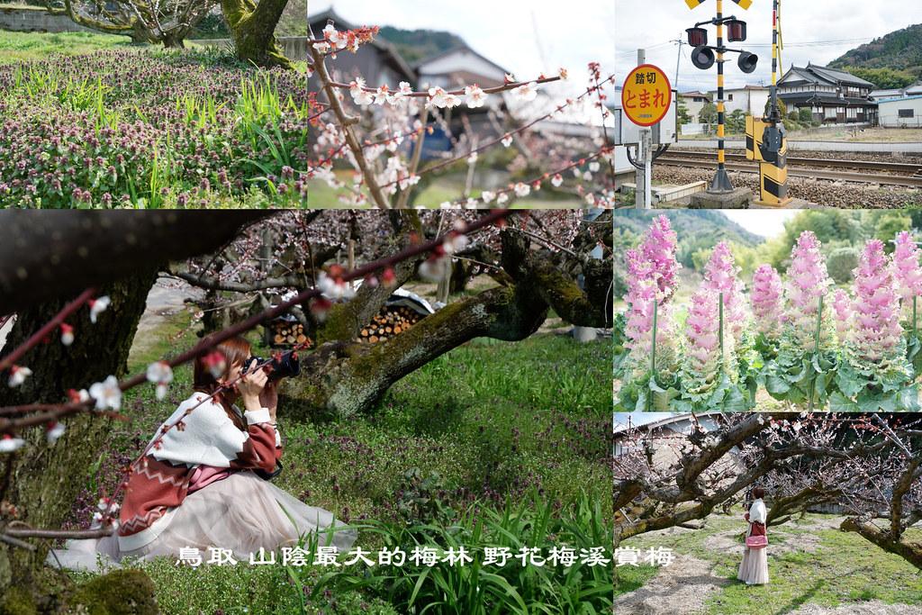 鳥取 鐵道旁的梅花田