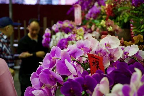 Taipei Orchid Market