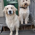 Sage & Millie
