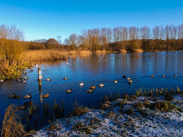 Brierley Forest Park