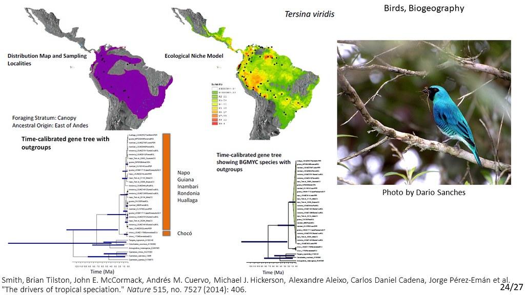 Smith et al. 2014 - Tersina viridis