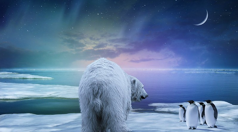 Обои белый медведь, пингвины, северное сияние картинки на рабочий стол, фото скачать бесплатно
