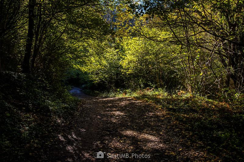 Camino de Ca l'Amat por el bosque junto al río Gurn