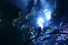 Underwater Tunnel [2]