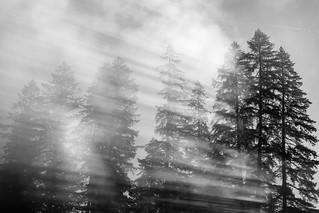 The Mist   by nicolesy