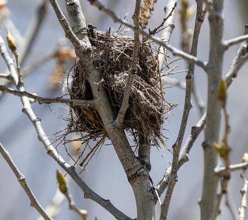 hummingbird_nest-20190407-103