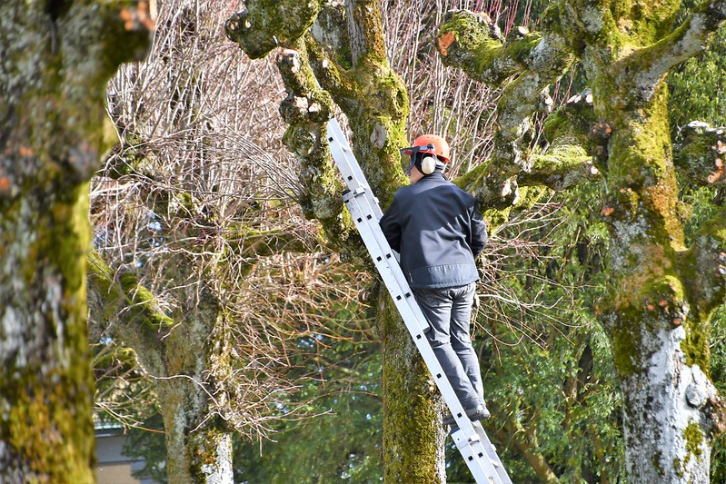 Cutting Trees 05.03 (1)