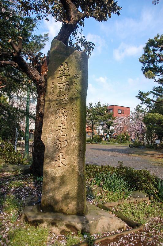 舟津公園(舟津温泉薬師堂)之櫻 (30)