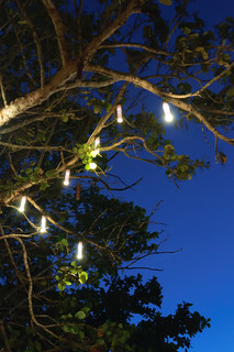 Tree Lights in Jamaica