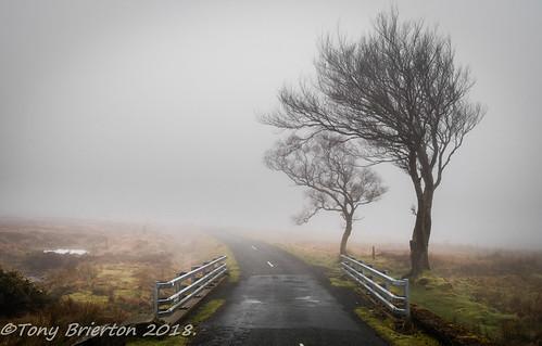 11418 fog loughtay mist mountains sallygap trees wicklowmts countywicklow ireland