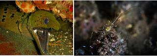 eel_shrimp   by thatslifescience