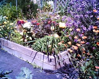 flower bed 4 13 18