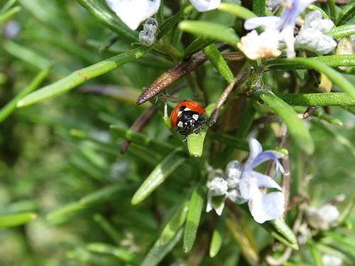 Ladybird | by stephanellidesigns