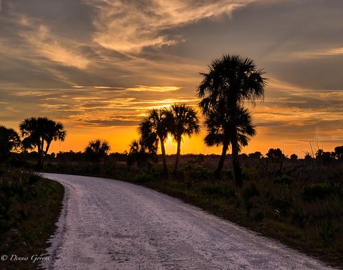 merrittisland clouds florida grasses landscape palmtrees sunset