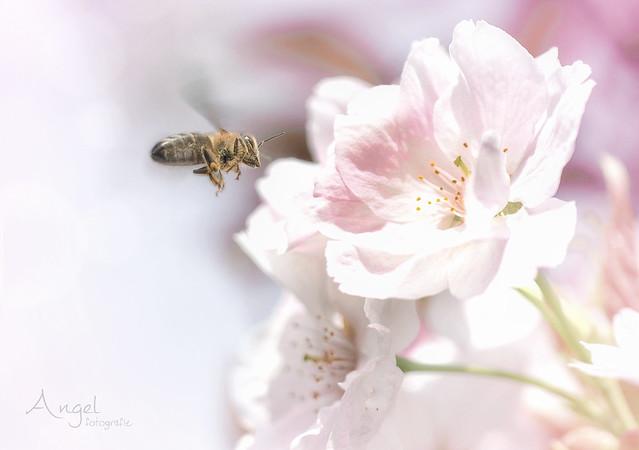 spring dream - Explored 2018-04-22