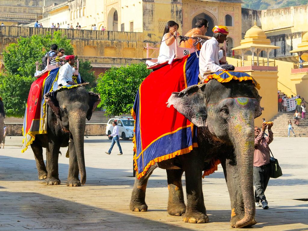 Elefantes en Amber, un mal ejemplo de turismo sostenible