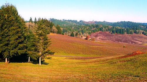 Sweet Cheeks Winery Vineyard in the Willamette Valley