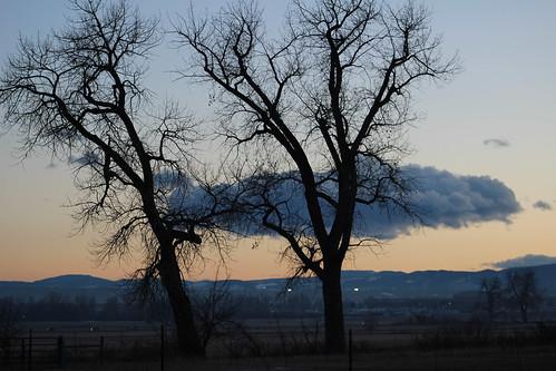 cottonwood cottonwoodtree evening dusk winter sunset cloud sky twotrees againstthesky owlhabitat eaglehabitat