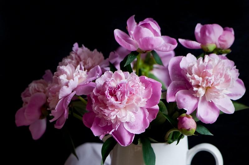 Обои розовый, букет, пионы картинки на рабочий стол, раздел цветы - скачать