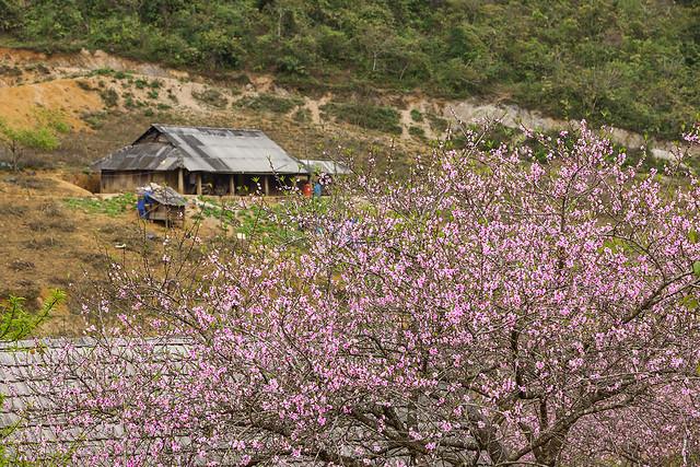 _J5K5823.0212.Lóng Luông.Vân Hồ.Mộc Châu.Sơn La