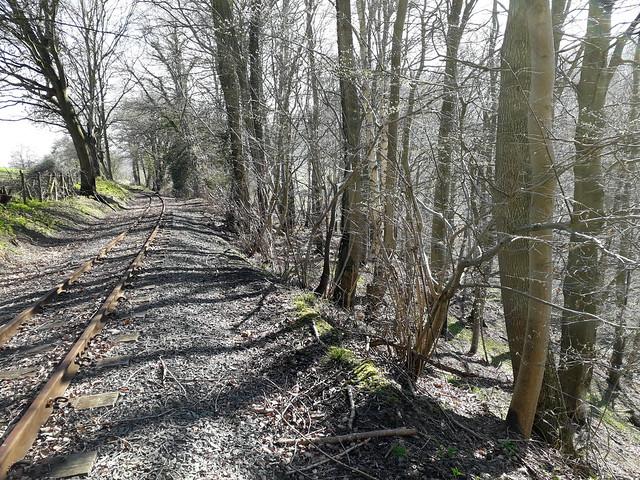 Overgrown Fence Line