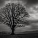 <p><a href=&quot;http://www.flickr.com/people/copseman/&quot;>Evoljo</a> posted a photo:</p>&#xA;&#xA;<p><a href=&quot;http://www.flickr.com/photos/copseman/47505321492/&quot; title=&quot;Goodrich Tree&quot;><img src=&quot;https://live.staticflickr.com/7890/47505321492_7cbcb04337_m.jpg&quot; width=&quot;240&quot; height=&quot;160&quot; alt=&quot;Goodrich Tree&quot; /></a></p>&#xA;&#xA;<p>View from Goodrich Castle Herefordshire England UK</p>