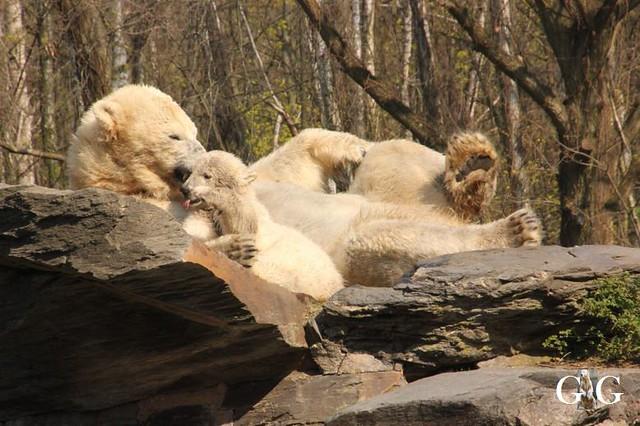 Besuch Tierpark Friedrichsfelde 06.04.201970