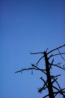 IMG_7741 | by milosphoto027