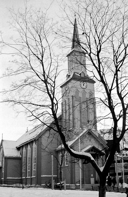 Un campanar entre branques / Tree & tower