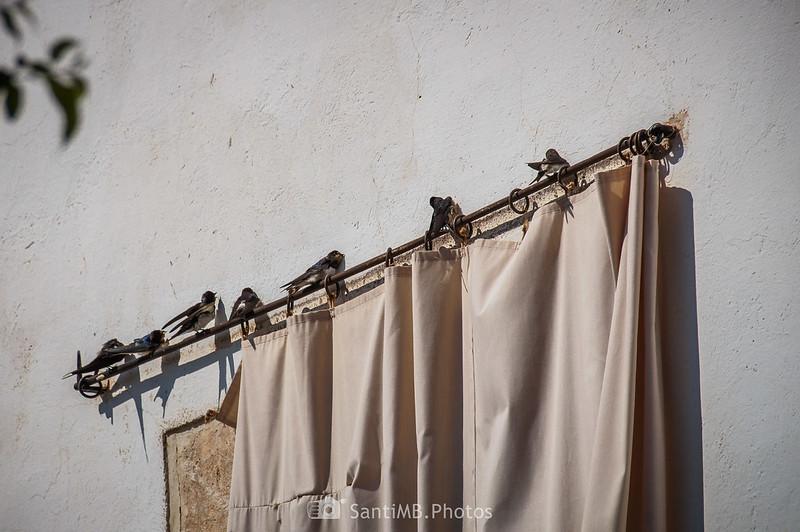 Golondrinas en la barra de una cortina en Finca Viladellops
