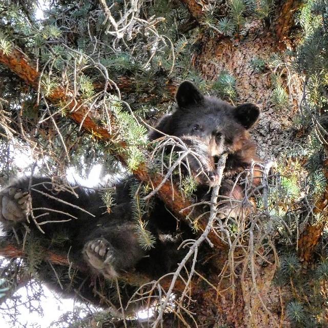 Black Bear Lake City, Colorado