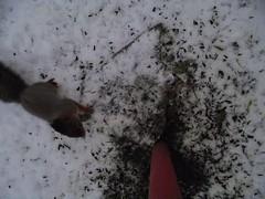Orav rajakaameras / Squirrel