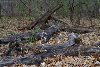 forest decay | by pvh photo