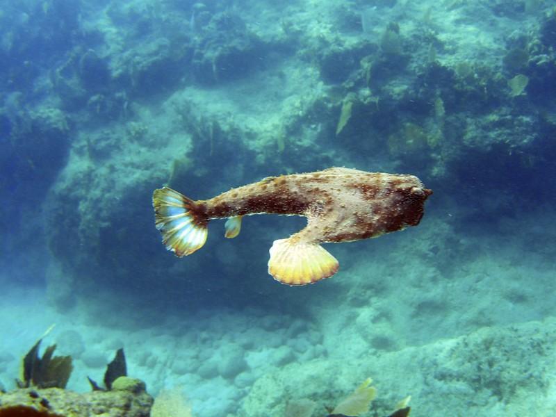 G-July 11th 2012 La Boca Diving Pedro 2620 - Version 2