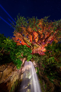 Lasers & the Tree of Life | by TheTimeTheSpace