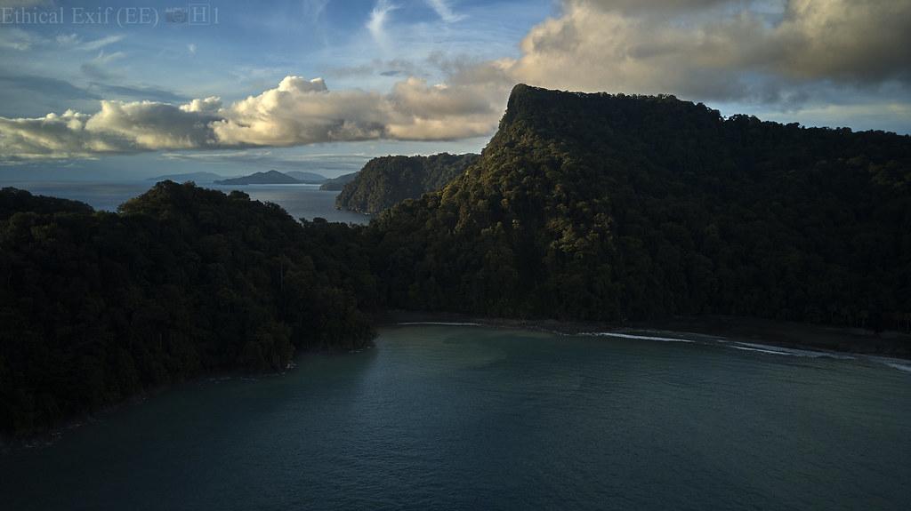 Pacific coastal rainforest