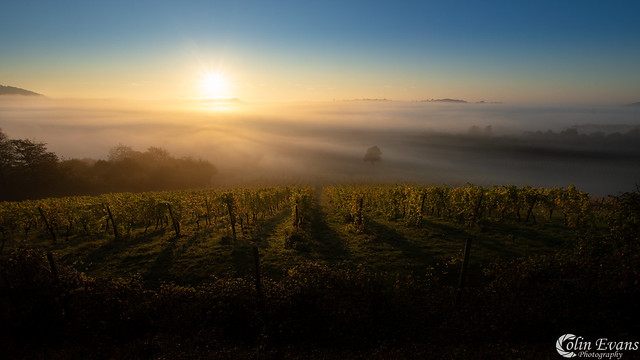 Denbies Sunrise