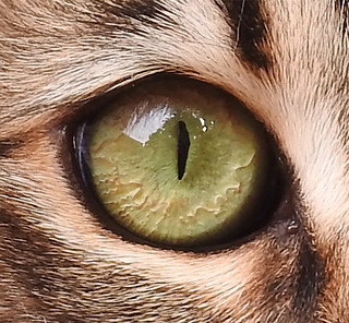 WS1902: Cat Eye - Photo Reference | by COLORED PENCIL magazine