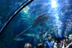 Underwater Tunnel [1]