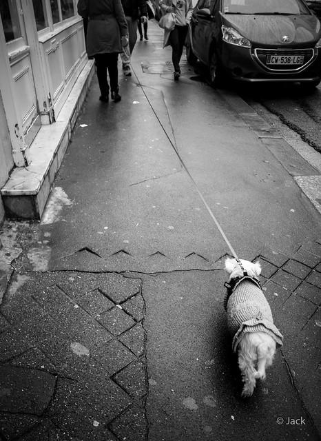 le chien chien