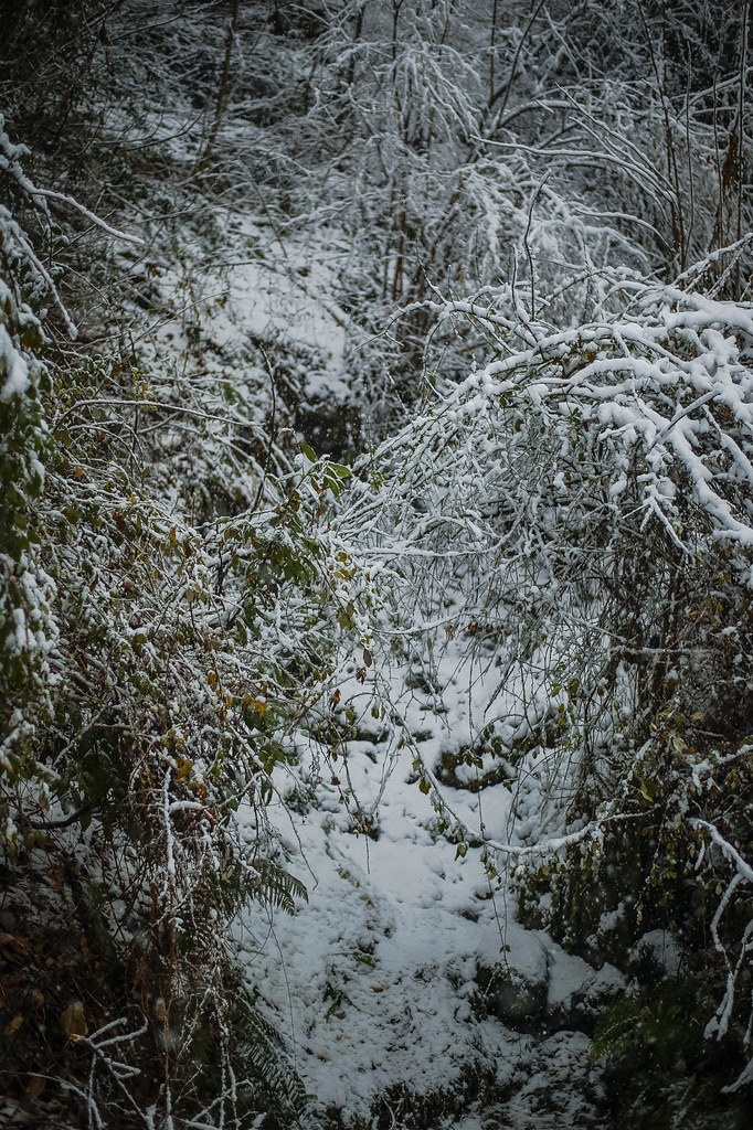 Зимняя сказка DSC_6311