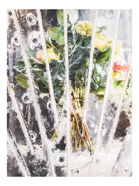 Frozen Beauty - Winter Optiks I - Chestnut Hill - PA - USA_Web 1_Scaled-X