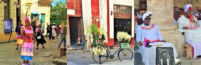 Floribunda Roses & Gladioli