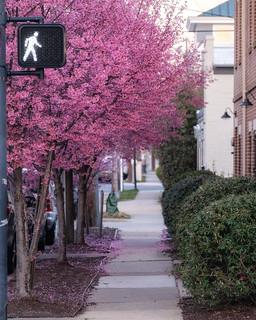 Walk to Spring