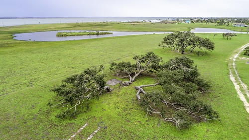 aransascounty gooseislandstatepark rockport texas thebigtree usa aerial attraction green image landmark landscape oaktree oaktrees photo photograph touristattraction trees f45 mabrycampbell march 2019 march162019 20190316aerialcampbelldji0862 88mm ¹⁄₈₀sec 100 24mm fav10