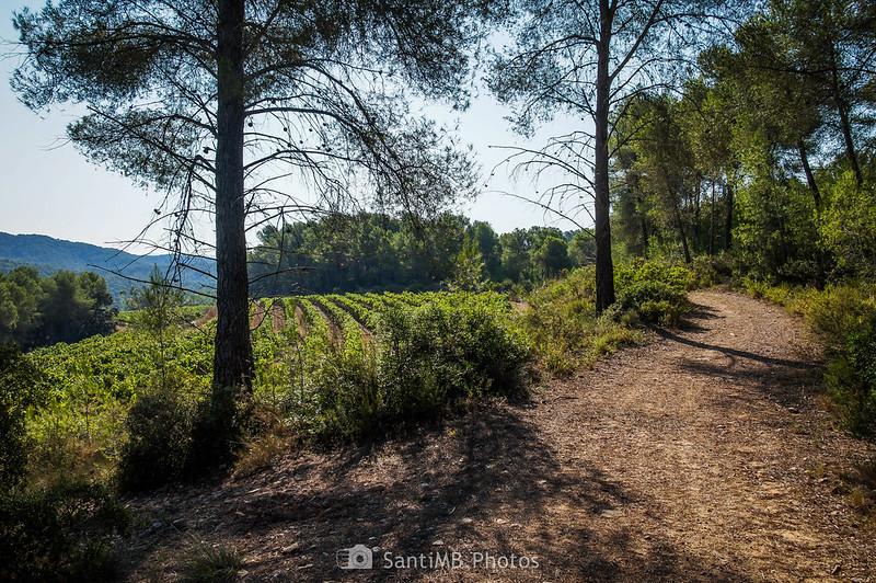 Viñedos y bosques de la Roqueta de Olivella
