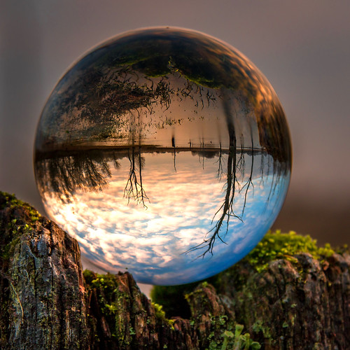 "crystalball deadtrees sunrise cramlington uk england trees extraordinarilyimpressive ""northeast england"" landscape green blue lensball glassball flickrexploreme refraction"