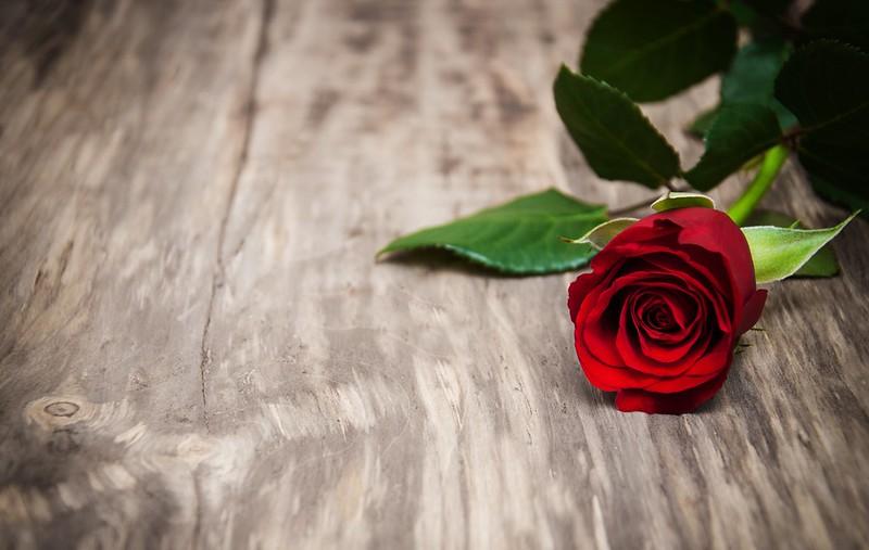 Обои роза, red, rose, бутоны, wood, flowers, romantic, красные розы, valentine`s day картинки на рабочий стол, раздел цветы - скачать