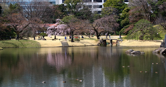 Japanese Garden in Early Spring